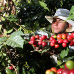 Colombia coffee grower