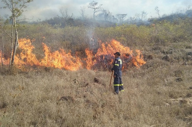 The departments with the greatest damage include: Casanare (15,953 hectares); Huila (10,851 hectares); Cundinamarca (10,713 hectares); and Arauca (10,288 hectares). [Photo: Colombian National Bureau of Fire Departments]