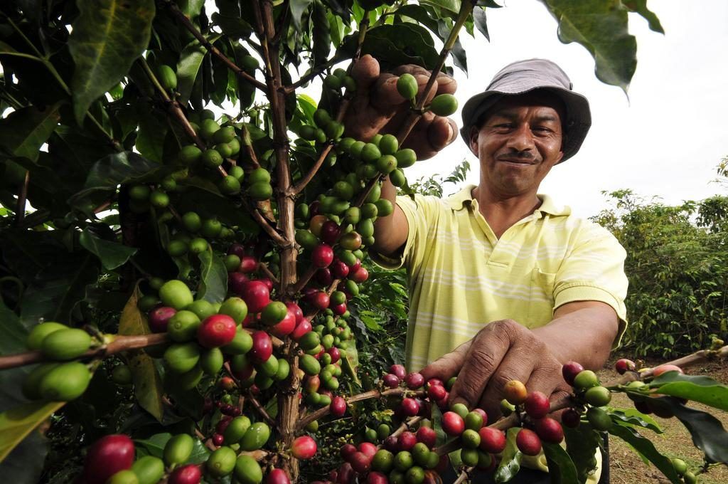 A-coffee-farm-worker-in-Cauca-southwestern-Colombia.